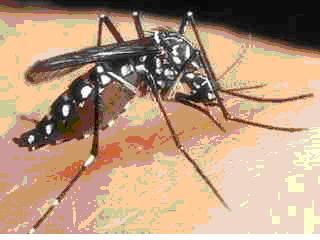 moustique2.jpg